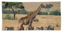 Giraffe Giraffa Camelopardalis Beach Towel