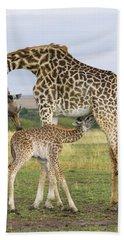 Giraffe Nuzzling Her Nursing Calf Beach Towel