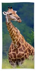 Giraffe Portrait Closeup Beach Towel
