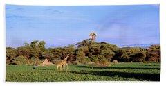 Giraffes In A Field, Moremi Wildlife Beach Towel