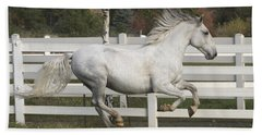Beach Towel featuring the photograph Glorious Gunther D2972 by Wes and Dotty Weber