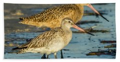 Godwits Beach Sheet by Jane Luxton