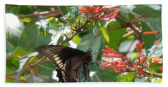 Beach Towel featuring the photograph Gold Rim Swallowtail by Ron Davidson