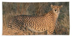 Golden Cheetah At Sunset Beach Towel by Tom Wurl