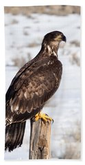 Golden Eagle On Fencepost Beach Towel by Nadja Rider