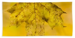 Beach Towel featuring the photograph Golden Maple Leaf by Sebastian Musial