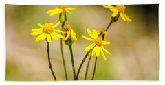 Golden Ragwort Beach Sheet