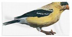 Goldfinch  Beach Towel by Anonymous