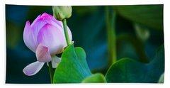 Graceful Lotus. Pamplemousses Botanical Garden. Mauritius Beach Sheet
