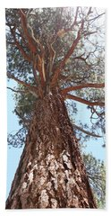 Graceful Tree Beach Towel by Amy Gallagher