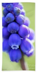 Grape Hyacinth Beach Towel
