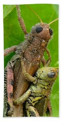 Beach Towel featuring the photograph Grasshoppers Mating With Dew by Daniel Reed