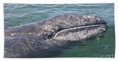 Gray / Grey Whale Eschrichtius Robustus Beach Towel