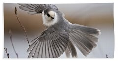 Gray Jay Pictures 319 Beach Towel