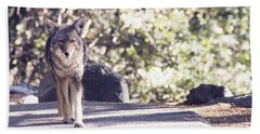 Coyote And Me At Vernal Falls Beach Towel by Debby Pueschel