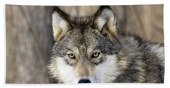 Gray Wolf Or Timber Wolf Beach Towel