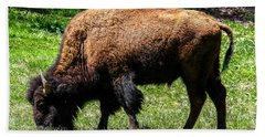 Beach Towel featuring the photograph Grazing In The Grass by Robert L Jackson