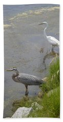 Great Blue And White Egrets Beach Towel