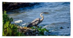 Great Blue Heron And Snowy Egret At Dinner Time Beach Towel