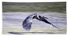 Great Blue Heron In Flight Beach Sheet by John Haldane