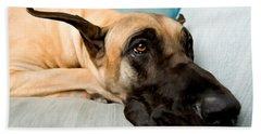 Great Dane Dog On Sofa Beach Towel by Lanjee Chee