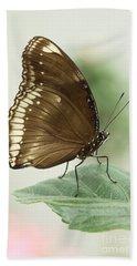 Great Eggfly Butterfly Beach Sheet by Judy Whitton