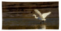 Great Egret Taking Off Beach Sheet