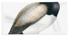 Greater Scaup Beach Towel by Anonymous