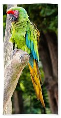Green And Yellow Macaw Beach Towel