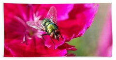 Green Bottle Fly On Dianthus  Beach Towel