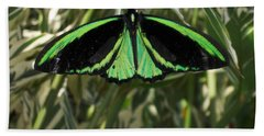 Beach Towel featuring the photograph Green Butterfly by Brenda Brown