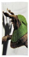 Green Hair Moth Beach Towel