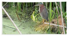 Beach Towel featuring the pyrography Green Heron by Ron Davidson