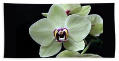 Green Hybrid Phalaenopsis Flower With A Red Wine Center Beach Towel