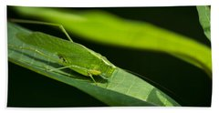 Green Katydid Beach Towel by Christina Rollo