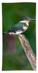 Green Kingfisher Chloroceryle Beach Towel by Panoramic Images