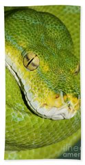 Beach Towel featuring the photograph Green Tree Python #2 by Judy Whitton