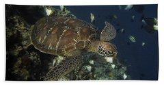 Hawksbill Turtle Beach Towel by Sergey Lukashin