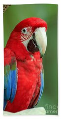 Green-winged Macaw Beach Towel