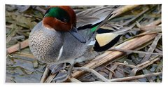 Beach Sheet featuring the photograph Green-winged Teal by Debra Martz