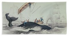 Greenland Whale Book Illustration Engraved By William Home Lizars  Beach Towel