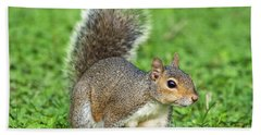 Beach Sheet featuring the photograph Grey Squirrel by Antonio Scarpi