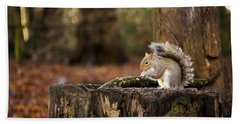 Grey Squirrel On A Stump Beach Towel