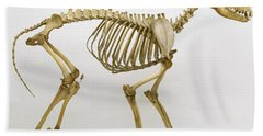 Grey Wolf, Canis Lupus, Skeleton Beach Towel