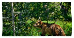 Beach Sheet featuring the photograph Grizzly Bear 760 by Greg Norrell