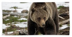 Beach Sheet featuring the photograph Grizzly Bear In Spring by Jack Bell