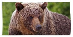Grizzly Portrait Beach Sheet