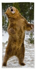 Grizzly Standing Beach Sheet by Jerry Fornarotto