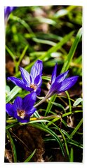 Beach Towel featuring the photograph Hocus Crocus by Dee Dee  Whittle