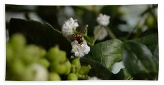 Gypsophilia Hover Fly Beach Sheet
